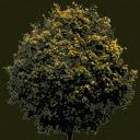 newtreeleavesb128 - plants_officeext.txd