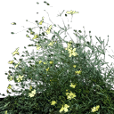 starflower4 - rodeo04_law2.txd