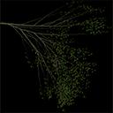 Elm_treegrn4 - tree1prc.txd