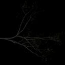 Locustbra - tree2.txd