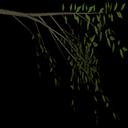 weeelm - tree2.txd