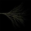 elmdead - tree2prc.txd