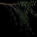 weeelm - tree2prc.txd