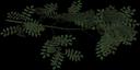 ashbrnch - tree3prc.txd
