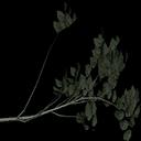 hazelbrnch - tree3prc.txd