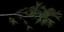 pinebrnch1 - tree3prc.txd