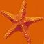 starfish64 - underwater.txd