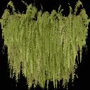 kb_balcony_ferns - veg_leaves.txd