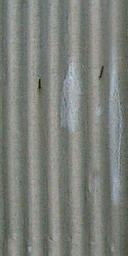 ws_corr_metal3 - vgnusedcar.txd