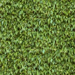 veg_hedge1_256 - vgnvrock.txd