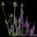 starflower1 - vgsebushes.txd