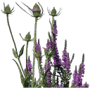 starflower1 - vgsn_flowers.txd
