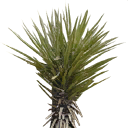 sm_minipalm1 - wiresetc_las.txd