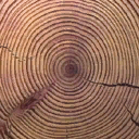 Gen_Log_End - woodpillar01_lvs.txd