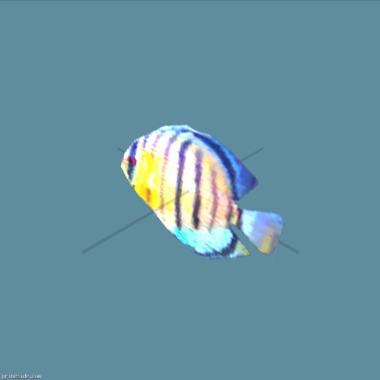 Blue and yellow striped flat fish (fish3single) [1604] on the dark background