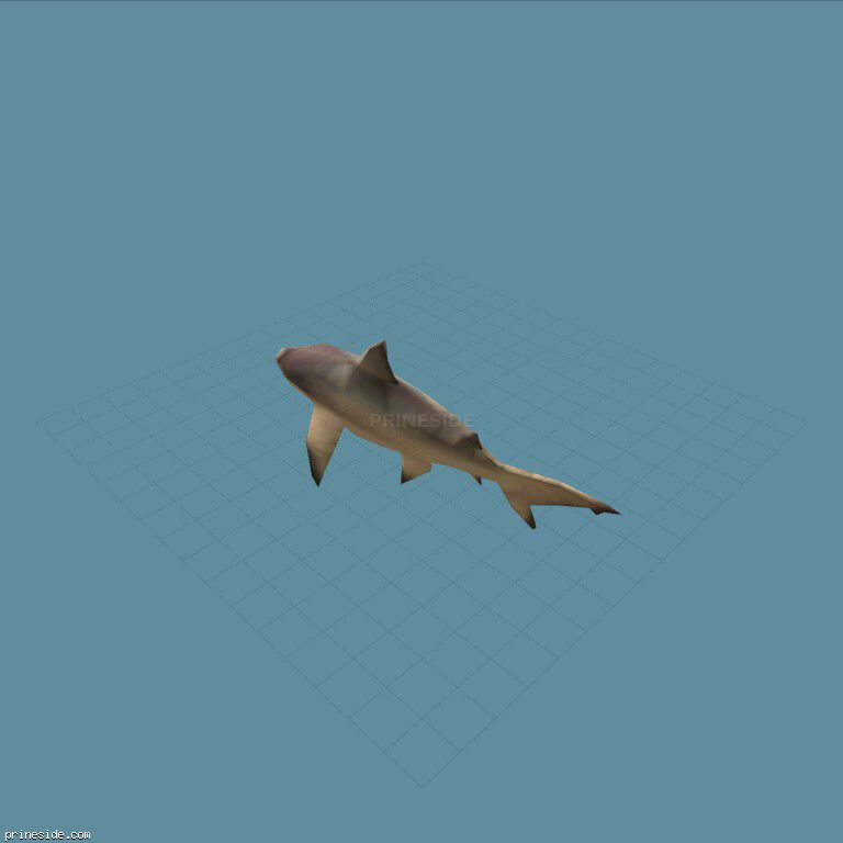 Shark (shark) [1608] on the dark background