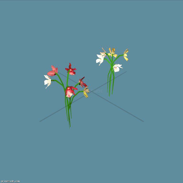 fun_flower_law [2895] on the dark background