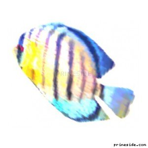 Blue and yellow striped flat fish (fish3single) [1604] on the light background