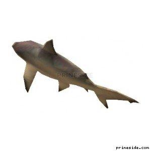 Shark (shark) [1608] on the light background