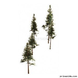 High conifers (cw2_mntfir05) [18268] on the light background