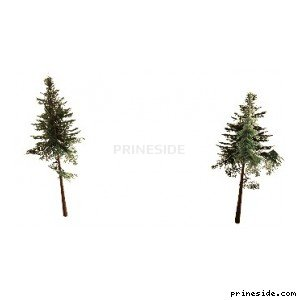 Two coniferous tree (cw2_mntfir11) [18269] on the light background