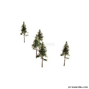 Five tall pine trees  (cw2_mntfir13) [18270] on the light background