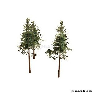 Three tall, coniferous tree (cw2_mntfir16) [18271] on the light background