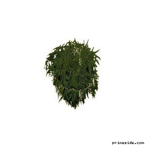 grassplant01 [19473] on the light background