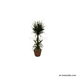 A small potted plant (nu_plant_ofc) [2001] on the light background