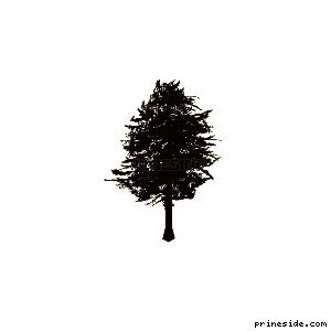 Coniferous tree (pinetree06) [655] on the light background