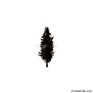 Coniferous tree (pinetree03) [660] on the light background