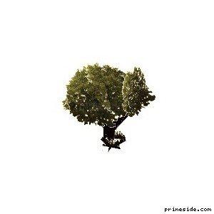 sm_veg_tree5 [672] на светлом фоне
