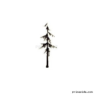 A tall, coniferous tree (sm_fir_scabby) [685] on the light background