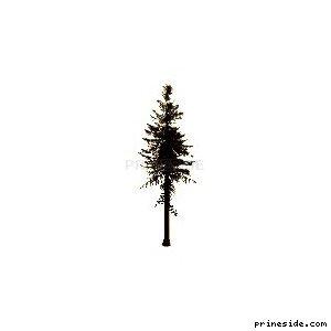 Высокое хвойное дерево (sm_fir_) [687] на светлом фоне