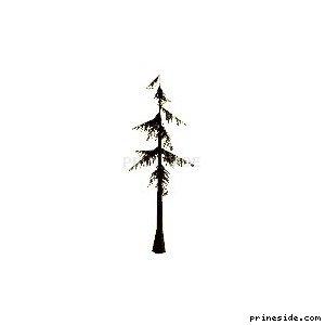 Хвойное дерево (sm_fir_scabt) [696] на светлом фоне