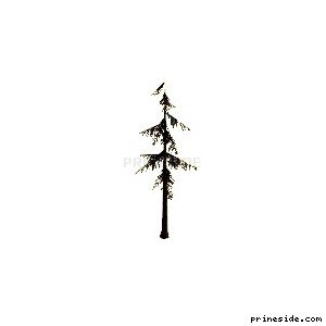 High coniferous tree (veg_largefurs02) [721] on the light background
