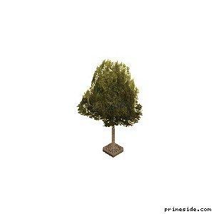 Зеленое густое дерево из клумбы (aw_streettree2) [738] на светлом фоне
