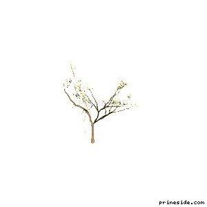 Небольшое дерево (Locust_hi) [769] на светлом фоне