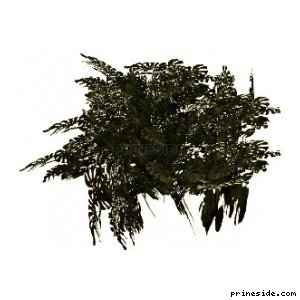 Large Bush (genVEG_tallgrass08) [824] on the light background
