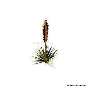 Небольшой куст (sand_plant05) [862] на светлом фоне